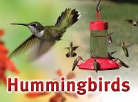 Songbird Essentials Hummingbird Sign