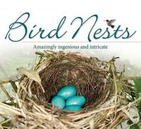 Adventure Publications Bird Nests