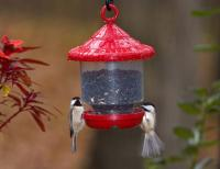 Songbird Essentials Clingers Only Bird Feeder  - Red