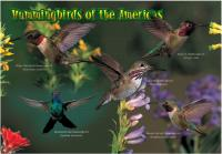 Impact Photographics Kids Puzzle Hummingbirds
