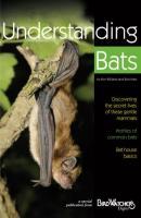 Bird's Choice Understanding Bats