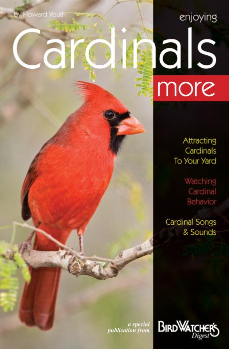 Bird Watcher's Digest Enjoying Cardinals More