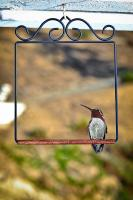 Pop's Hummingbird Swings Flat Black Hummingbird Swing