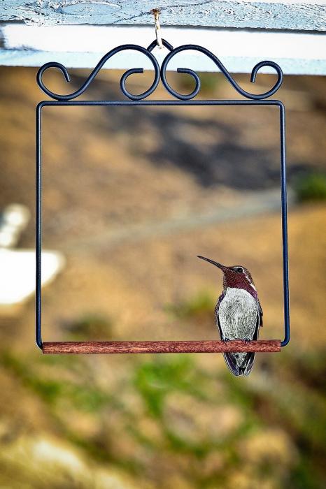 Pop's Hummingbird Swings Flat Black Hummingbird Swing