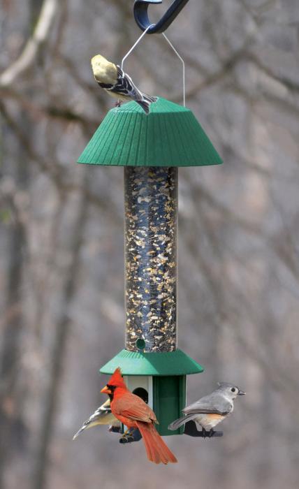 Songbird Essentials Squirrel Defeater Seed Feeder
