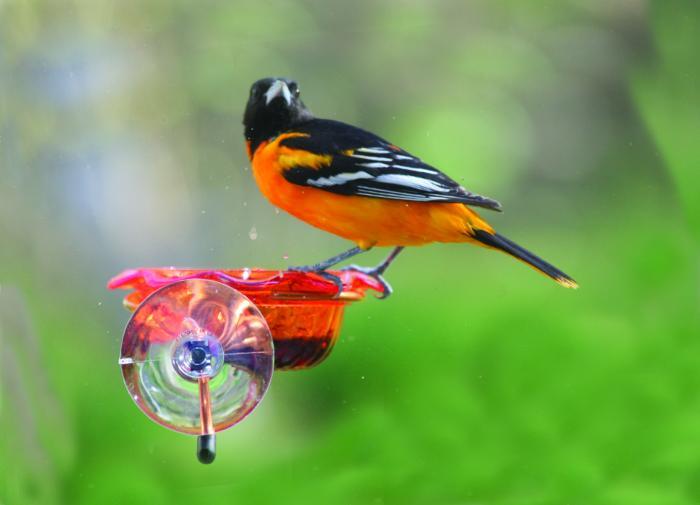 Birds Choice Copper Oriole Window Bird Feeder (Orange)
