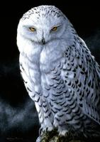 Tree Free Greetings Snowy Owl Blank