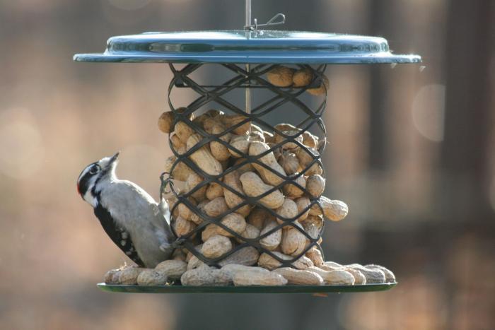 Bird's Choice Whole Peanut in the Shell Metal Bird Feeder