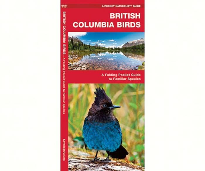 Waterford British Columbia Birds