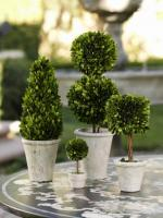 Zodax Preserved Boxwood Cone Shaped Topiary