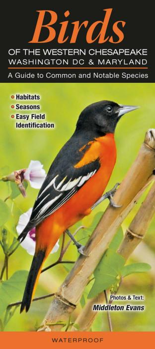Quick Reference Publishing Birds of Western Chesapeake: Washington D.C. and Maryland