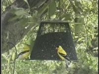 No-No Green Mesh Bird Feeder