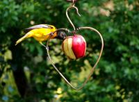 Songbird Essentials Heart Fruit Oriole Bird Feeder