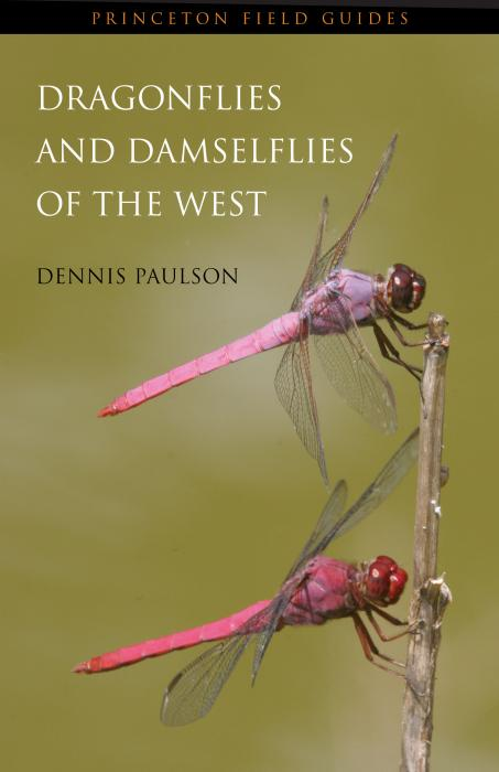 an introduction to the nature of dragonflies Introduction background dragonflies and damselflies are members of the insect order odonata  nature enthusiasts their large size and wide distribution make them.
