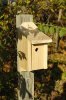 Heartwood Wren Joy Box Birdhouse
