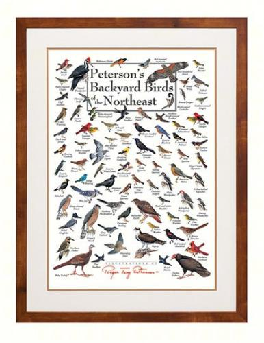 Steven M. Lewers & Associates Peterson's Backyard Birds of the Northeast Poster