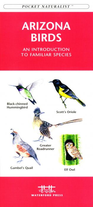 Waterford Arizona Birds