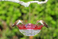 Aspects HummBlossom 4 oz Hummingbird Bird Feeder - Rose Color