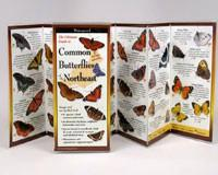 Steven M. Lewers & Associates Common Butterflies of the Northeast