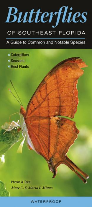 Quick Reference Publishing Butterflies of the Southeast Florida
