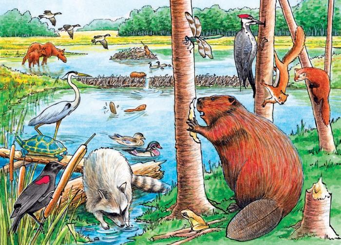 Outset Media Games The Beaver Pond Tray Puzzle 35 piece Puzzle