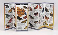 Steven M. Lewers & Associates Common Butterflies of the Midwest