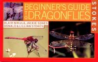 Beginner's Guide to Dragonflies