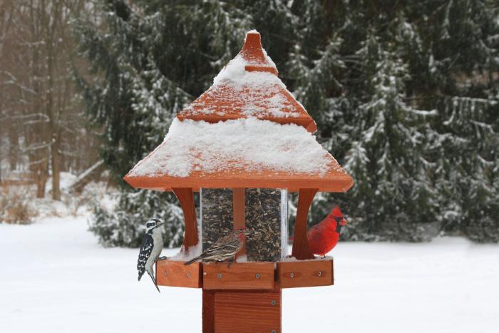 Songbird Essentials Century Bird Feeder