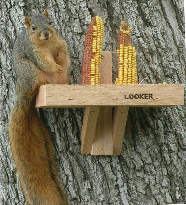 Songbird Essentials Squirrel Feeder
