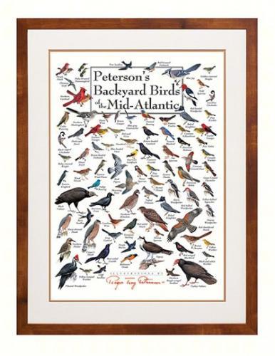 Steven M. Lewers & Associates Peterson's Backyard Birds of Mid-Atlantic Poster