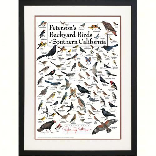 Steven M. Lewers & Associates Peterson's Backyard Birds of Southern California Poster