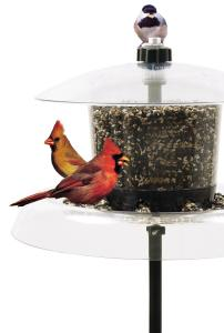 Squirrel Proof Bird Feeders by Droll Yankees
