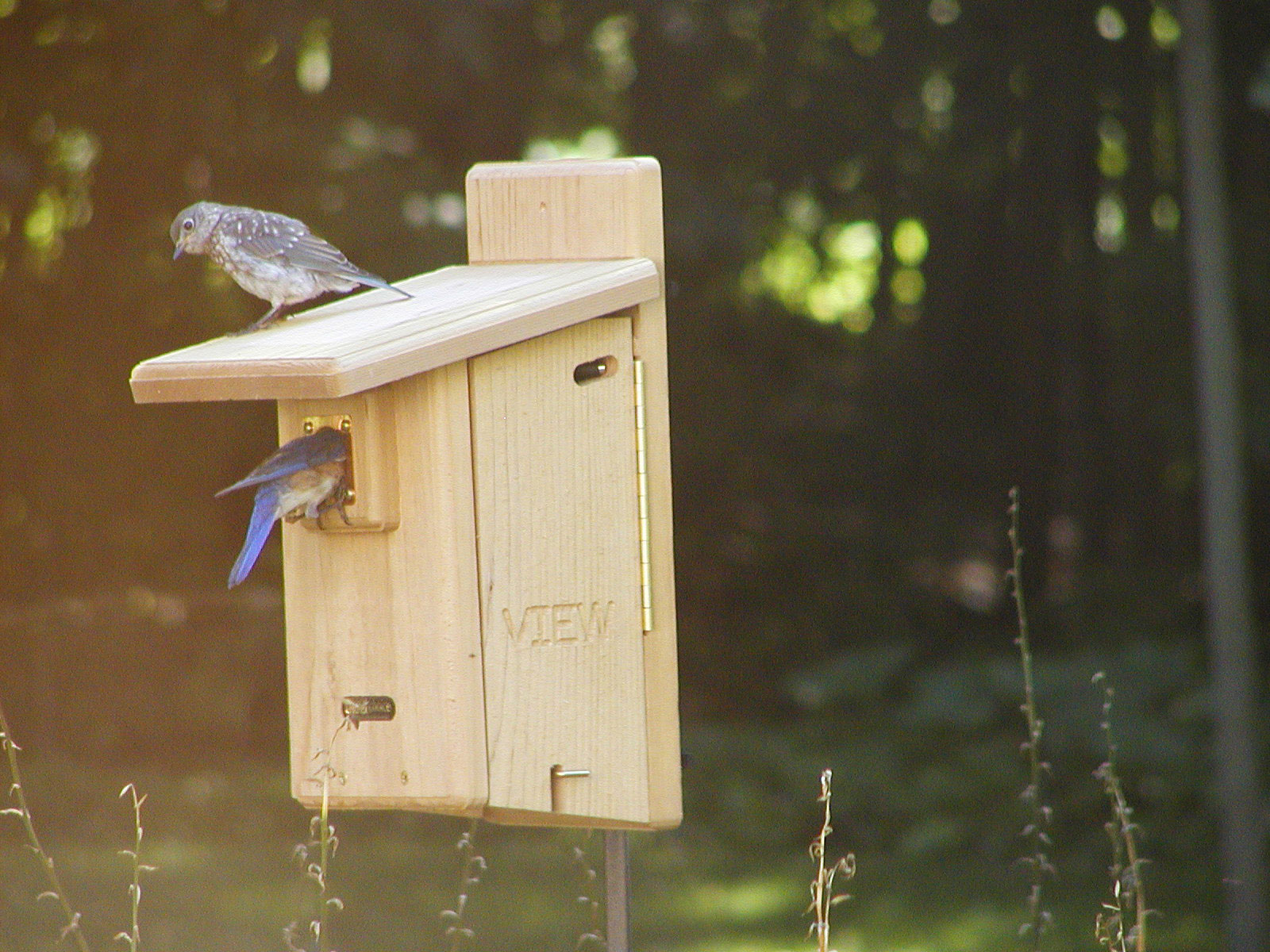 Bluebird house pictures