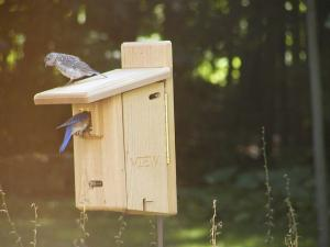Birds Choice Ultimate Bluebird House with Viewing Window and 2 Engraved Doors