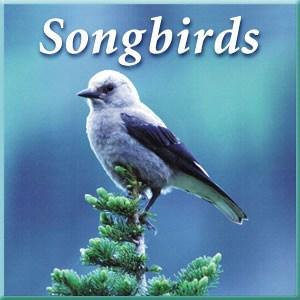 Naturescapes Songbirds CD