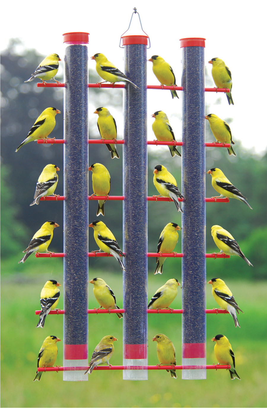 feed picture cling finch at feeders finchthistlebirdfeeders thistle of finches forever n clingnfeed feeder for wild birds bird and sak