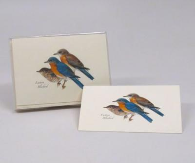 Steven M. Lewers & Associates Eastern Bluebird Notecard Assortment (8 of 1 style)