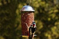 Pinebush Kilo Peanut Bird Feeder