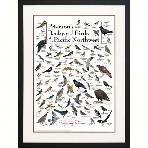 Steven M. Lewers & Associates Peterson's Backyard Birds of ...