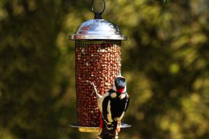 Tube / Finch Feeders by Pinebush