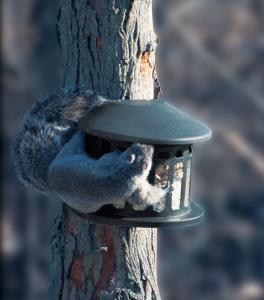 Heritage Farms Squirrel Diner 2