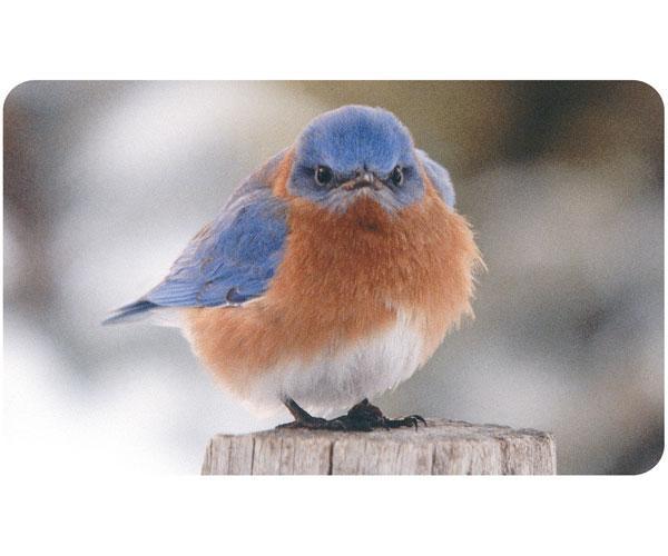 Songbird Essentials Doormat Mad Bluebird