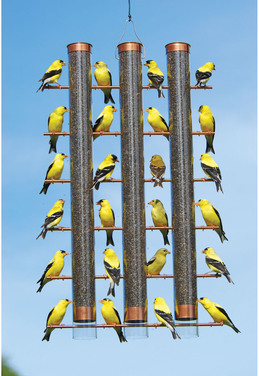 bird product droll feeder yankees feeders up bottoms lovers bl finch