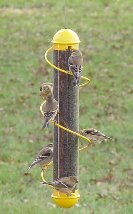 "Songbird Essentials 17"" Yellow Spiral Finch Tube Bird Feeder"