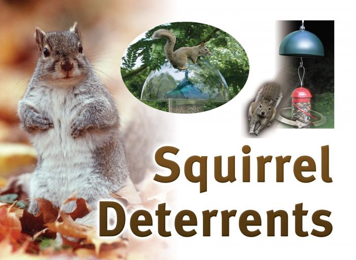 Songbird Essentials Squirrel Resistant Sign