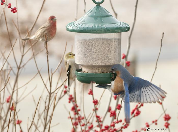 Songbird Essentials Clingers Only Bird Feeder - Green