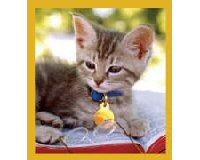 Magnetic Bookmark Smart Kitty