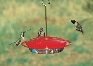 Hummingbird Feeders by Aspects