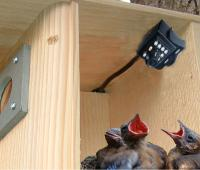 Birdhouse Spy Cam Hawk Eye HD Camera