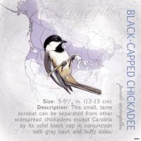 Tree Free Greetings Black-Capped Chickadee Magnet